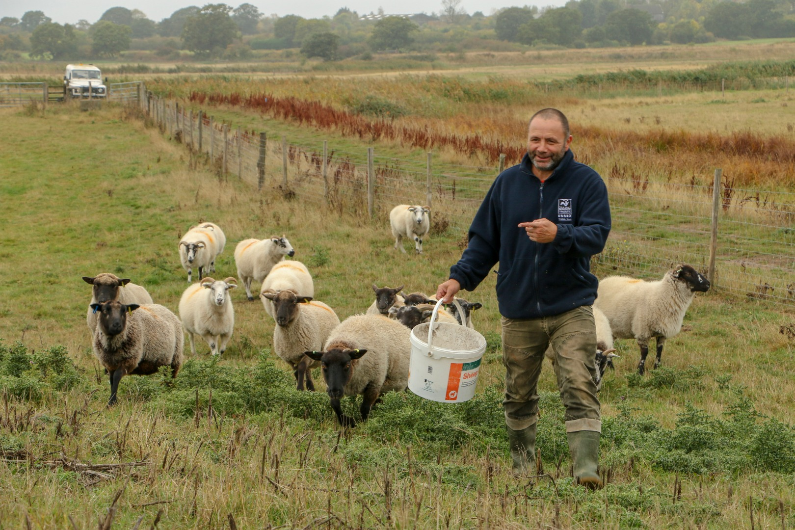 Feeding conservation grazing sheep